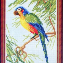 схема вышивки попугай